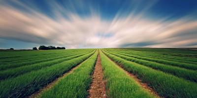 Регистрация на фирма в селското стопанство