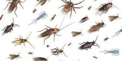Фумигация - основен инсектициден метод за борба с вредните насекоми