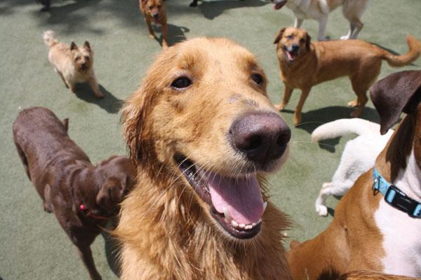 Хотели за кучета