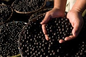 Acai Berry - ползи за здравето