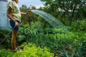 Напояване на растения