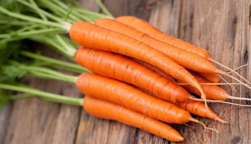 Сортови семена на моркови