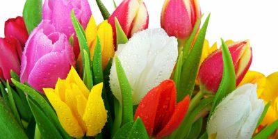 Цветя за нашата градина