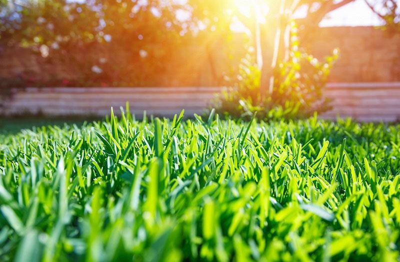 Озеленяване